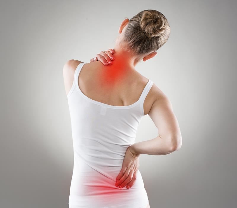 chiropractic services Palm Harbor, FL